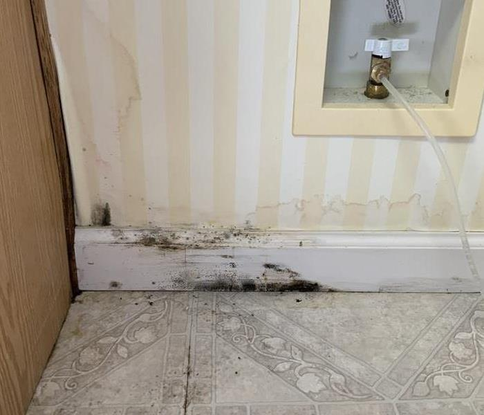 Mold found in a kitchen after water damage occurred